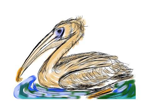 Hand Draw Bird Pelecanidae Kunstdruck