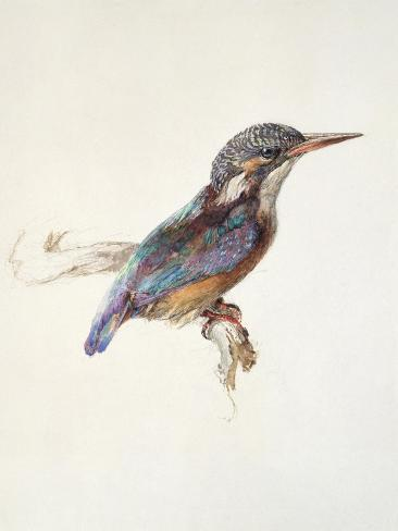 Study of a Kingfisher, with Dominant Reference to Colour, Probably October 1871 Giclée-Druck