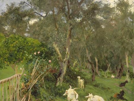 Olives in Corfu, 1909 Giclée-Druck