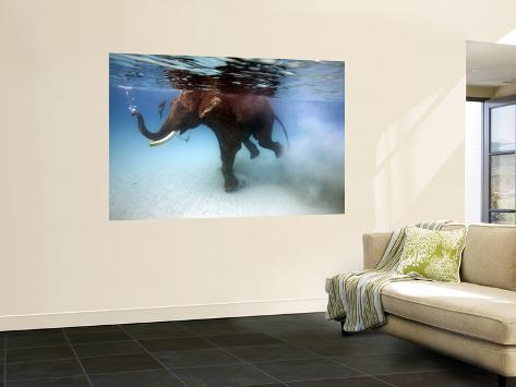 Elephant 'Rajes' Taking Swim in Sea Fototapete