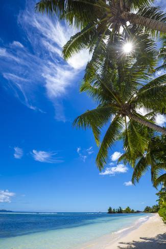 Palm Trees And Tropical Beach La Digue Seychelles Fotoprint