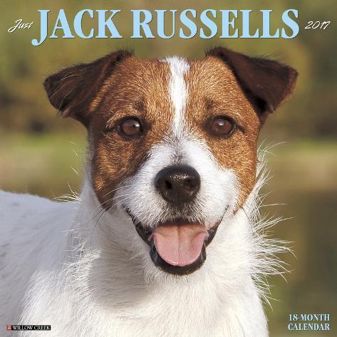 Just Jack Russells - 2017 Calendar Kalenders