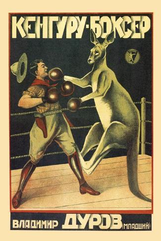 Kangaroo Boxer Muursticker