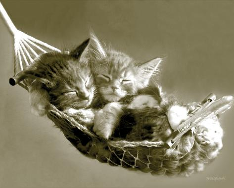 Keith Kimberlin - Kittens in a Hammock Mini-Poster