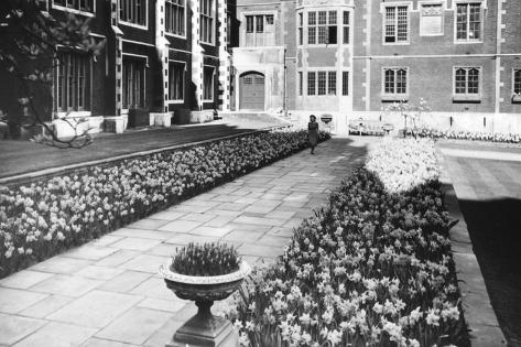 Kew Gardens Daffodils Fotografie-Druck