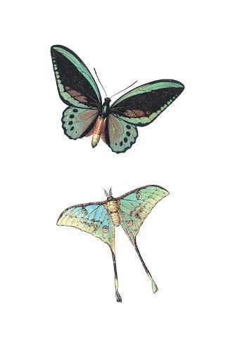 Fly Free 1 Kunstdruck