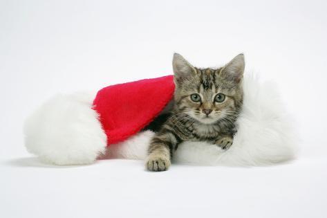 Kitten in a Christmas Hat Fotografie-Druck