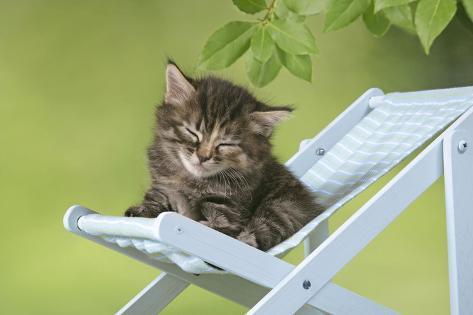 Kitten in Deckchair Fotografie-Druck