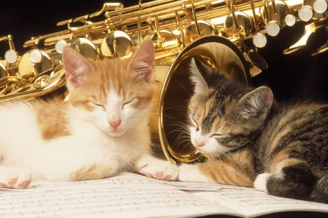 Kittens with Music and Saxophone Fotografie-Druck