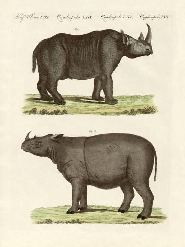 Large Four-Footed Mammals Giclée-Druck