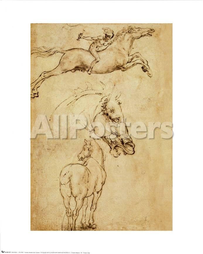 Skizze eines Pferdes Kunst von Leonardo da Vinci bei AllPosters.de