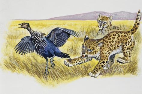 Leopard Cubs (Panthera Pardus) Giclée-Druck