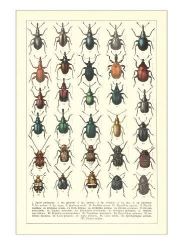 Lots of Beetles Kunstdruck