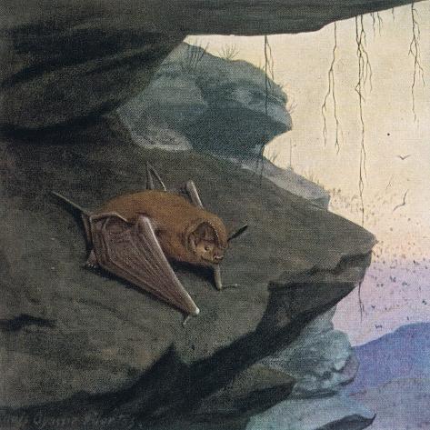 Free Tailed Bat Giclée-Druck