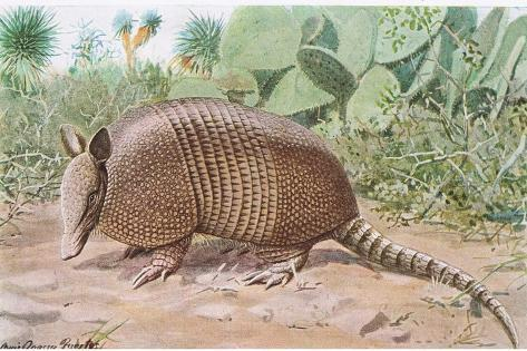 Nine Banded Armadillo, Named for the Overlapping Plates at Midriff Giclée-Druck