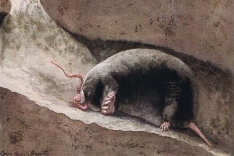 Townsend Mole Giclée-Druck