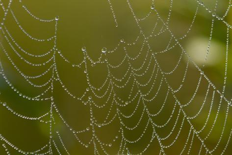 Web of an Orb-Weaving Spider, Perhaps Argiope Sp., in Dew, North Guilford, Connecticut, USA Fotografie-Druck