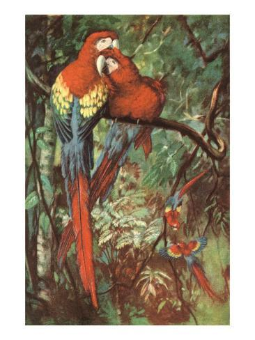 Macaws Nuzzling in Jungle Kunstdruck