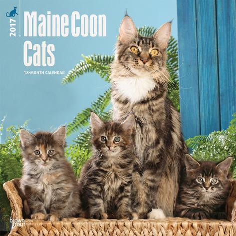 Maine Coon Cats - 2017 Calendar Kalenders