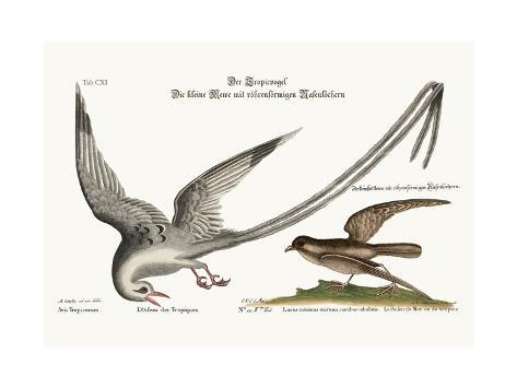 The Tropick Bird. the Storm-Finck or Pittrel, 1749-73 Giclée-Druck