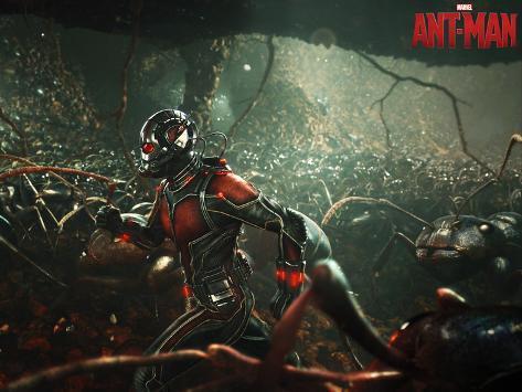Marvel: Scott Lang Poster
