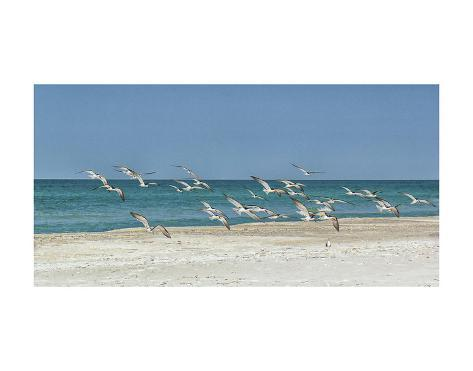 Beach Skimmers Kunstdruck