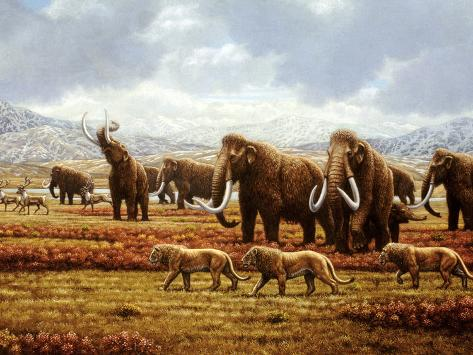 Woolly Mammoths Fotografie-Druck