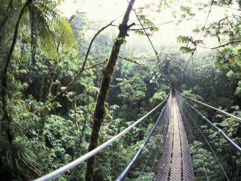 Sky Walk, Monteverde Cloud Forest, Costa Rica Fotografie-Druck