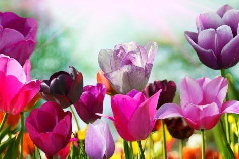 Beautiful Spring Flowers Fotografie-Druck