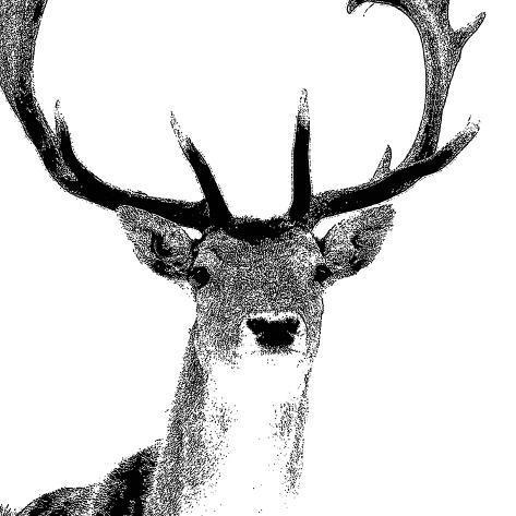 Forest Focus - Deer Giclée-Druck