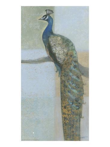 Resting Peacock II Kunstdruck