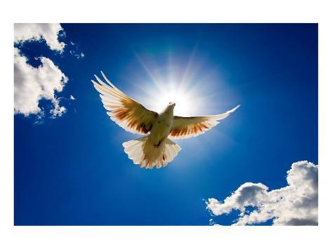 Peace Dove in-front of the sun Kunstdruck