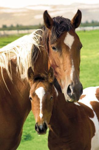 Pferde - Stute und Fohlen Poster