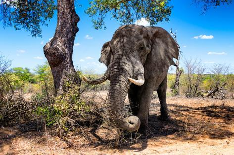 Awesome South Africa Collection - African Elephant Fotografie-Druck
