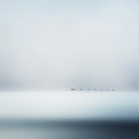 The Wild Geese Bedruckte aufgespannte Leinwand
