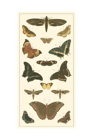 Cramer Butterfly Panel II Kunstdruck