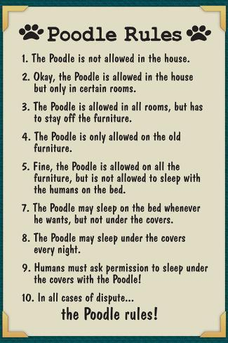 Poodle House Rules Poster