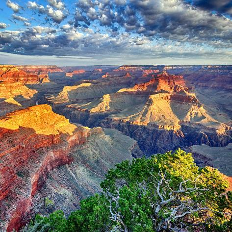 Morning Light at Grand Canyon Fotografie-Druck