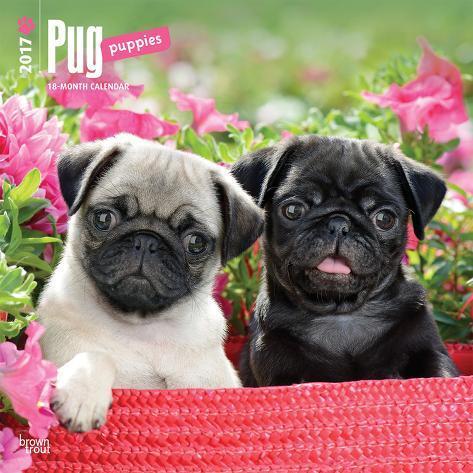 Pug Puppies - 2017 Calendar Kalenders