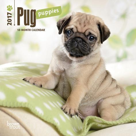 Pug Puppies - 2017 Mini Calendar Kalenders