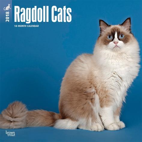 Ragdoll Cats 2018 Calendar Kalender Bei Allpostersde