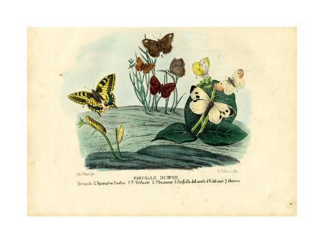 Butterflies, 1863-79 Giclée-Druck