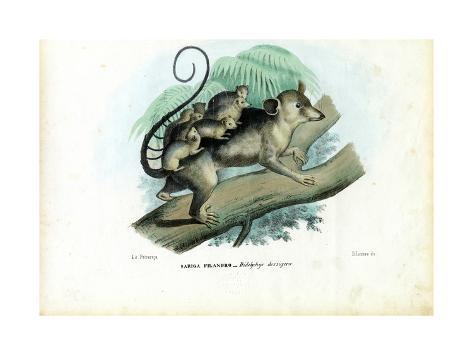 Opossum, 1863-79 Giclée-Druck