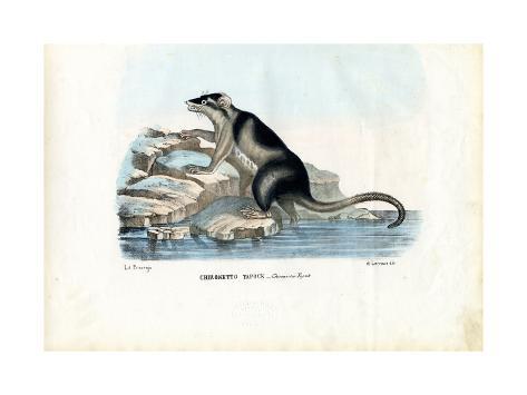 Yapok, 1863-79 Giclée-Druck