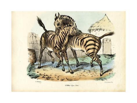 Zebra, 1863-79 Giclée-Druck