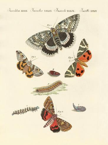 Rare German Night Butterflies Giclée-Druck