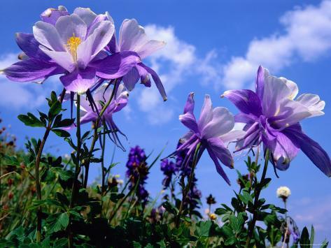 wilde bloemen fotoprint van rob blakers bij allposters.nl