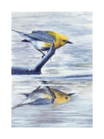 A Small Yellow Bird Lookin at His Reflection in the Water Giclée-Druck