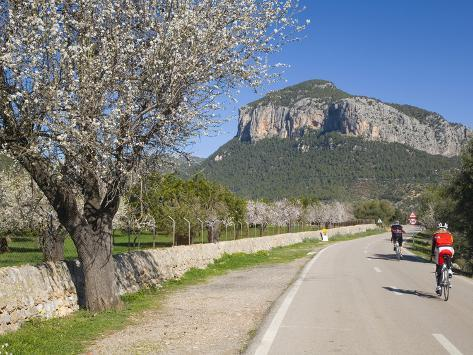 Cyclists on Country Road, Alaro, Mallorca, Balearic Islands, Spain, Europe Fotografie-Druck