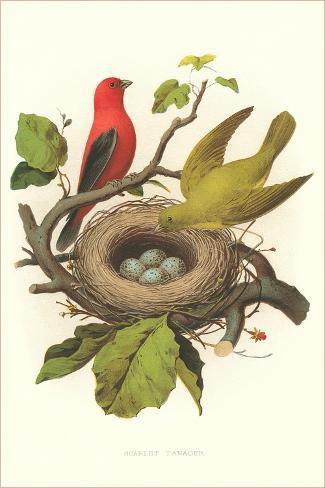 scarlet tanager nest and eggs kunst bei. Black Bedroom Furniture Sets. Home Design Ideas